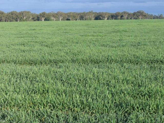 Merrimba crops