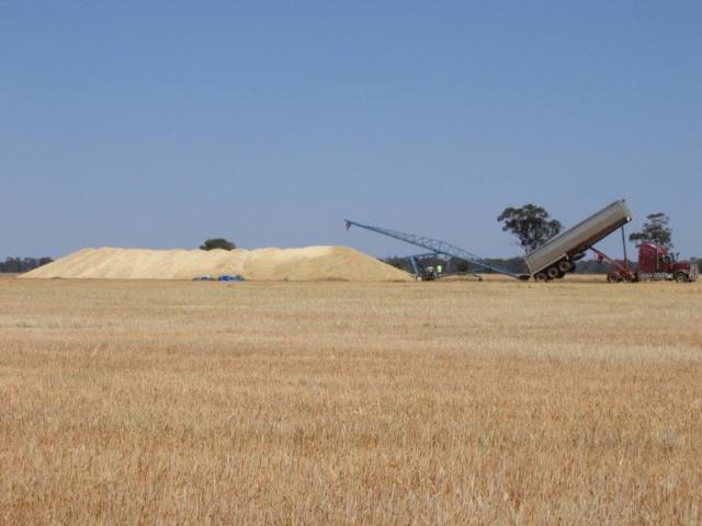 Merrimba grain