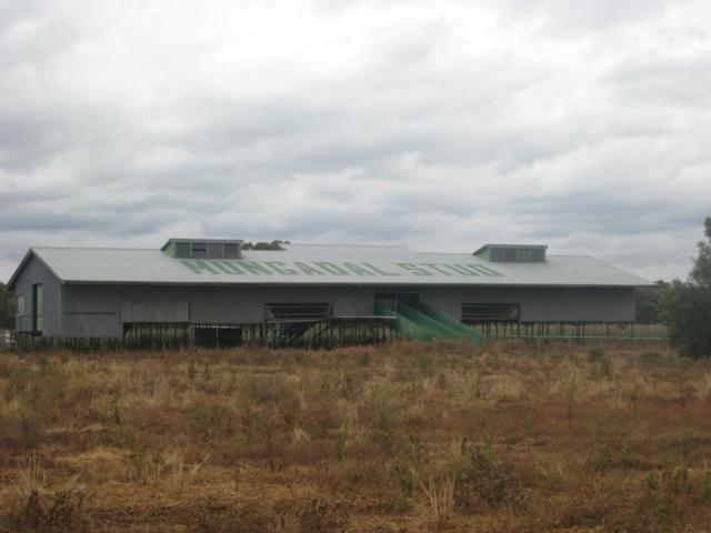 Mungadal shearing shed