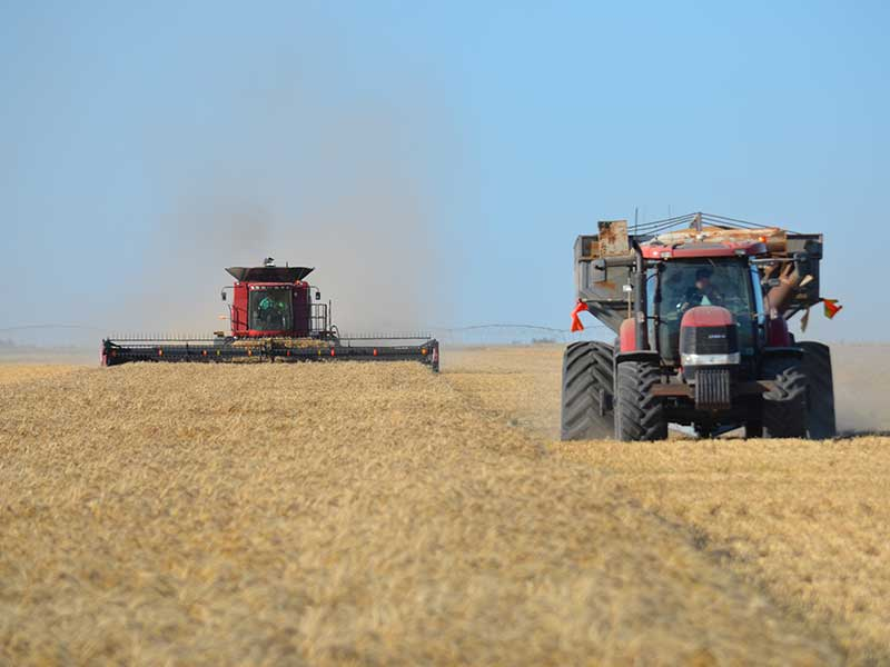 Steam Plains Harvest