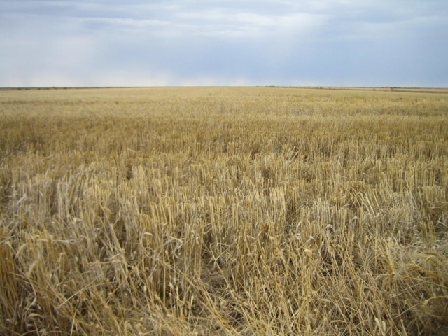 Steam Plains Stubble