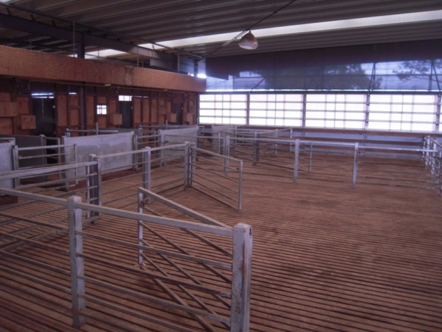 The Bulls Run new shearing shed