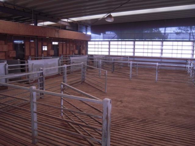 The Bulls Run new shearing shed